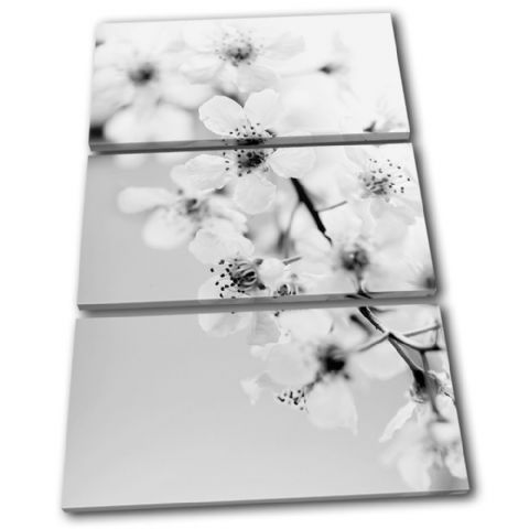 Cherry Blossoms Floral - 13-1660(00B)-TR32-PO